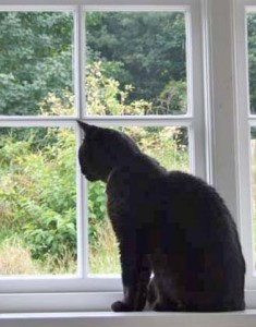 Baggy at window